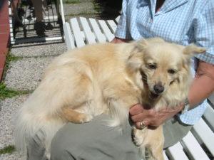 Dog Sitter San Donà di Piave Venezia - Sitter Piave