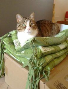 Cat Sitter Sitter Piave LEO