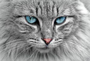 Cat Sitter - Sitter Piave - San Donà di Piave Venezia