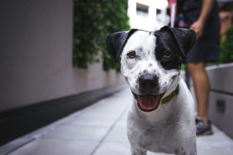 Dog Walking - Passeggiate con cani - Sitter Piave